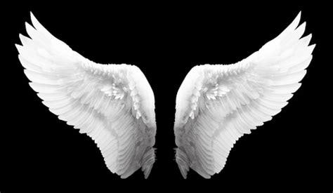imagenes reales red wings verleiht fl 252 gel irref 252 hrende werbung