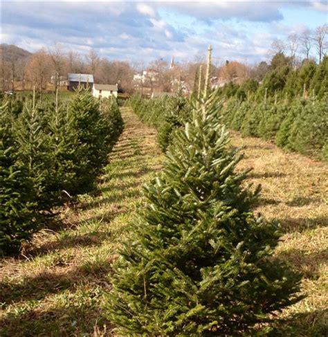 christmastree farms philadelphia philadelphia and southeastern pennsylvania tree farms choose and cut trees