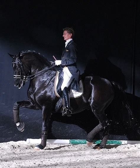 best dressage edward gal and moorlands totilas 244 best images about totilas on team