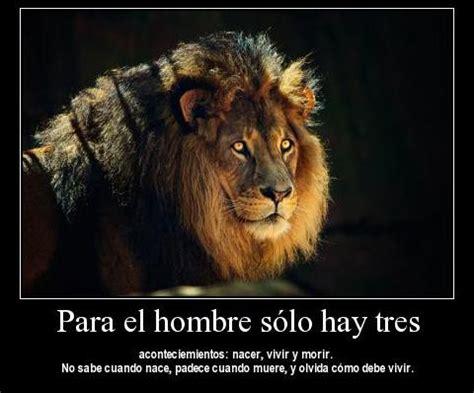 imagenes de leones tristes imagen leon
