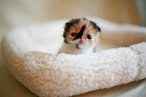 most adorable animals 40 of the most adorable animal gifs you ll ever see