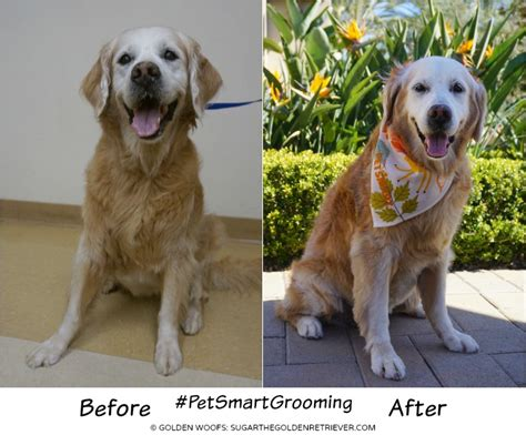 Jo In Pet Bell Tie Intl 100 11 best petsmart grooming coupons petsmart