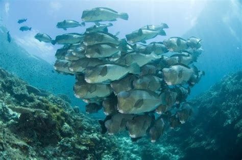 sipadan dive package sipadan diving package 4 days 3 nights sipadan permit