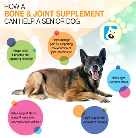 best vitamins for dogs supplements how to choose the best supplement for your breeds picture