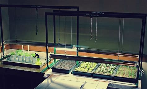 tips  growing plants   grow lights  grow