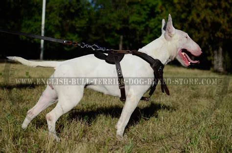 best attack dogs best adjustable leather bull terrier harness for attack work h1 1090 bull terrier