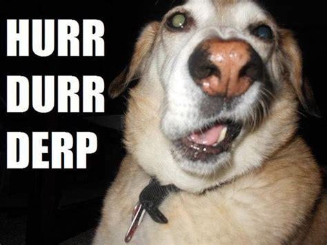 Derp Dog Meme - 25 very derpy dogs