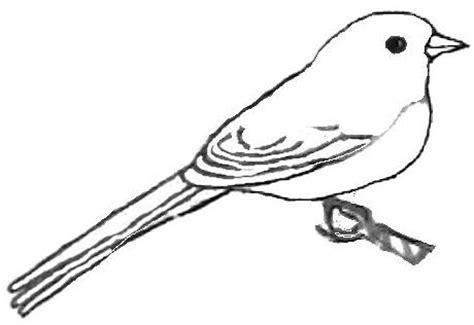 89 Junco Bird Coloring Page Great Lizard Cuckoo