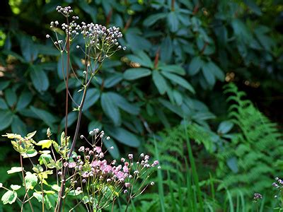Berry Botanic Garden Posie Gets Cozy Berry Botanic Garden