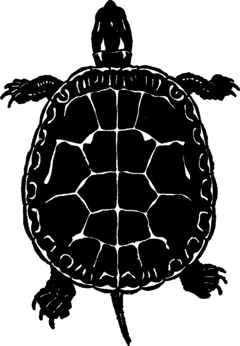clipart domain domain turtle image silhouette the graphics