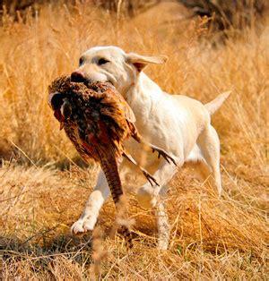 alimentazione cani da caccia caccia cacciatori di caccia foto caccia fucili e