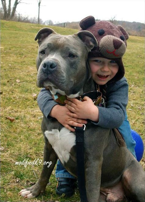 nanny dogs 25 best ideas about nanny on pitbull children pitbull photos and