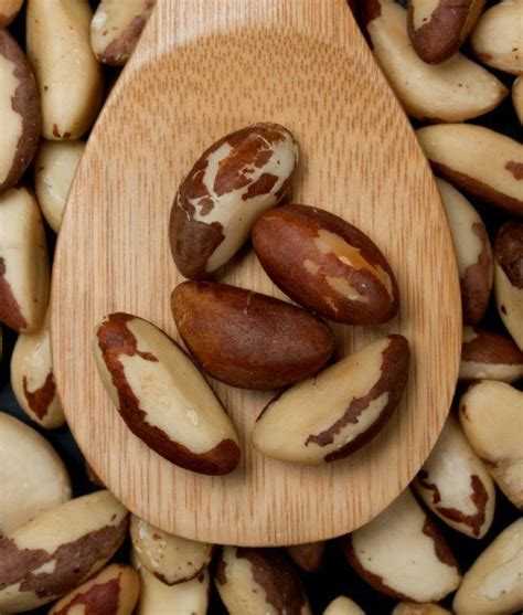 what nuts can dogs eat nuts that are unsafe for dogs to eat can dogs eat brazil nuts