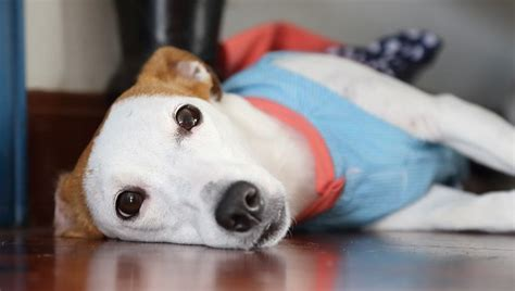 ursodiol for dogs ursodiol for dogs uses dosage side effects dogtime