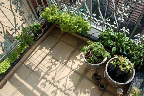 vasi da orto orto sul balcone kit orto in balcone kit per orto sul