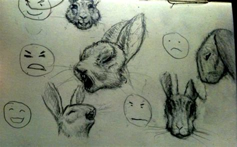 Bunny Expression rabbit expressions wolfire