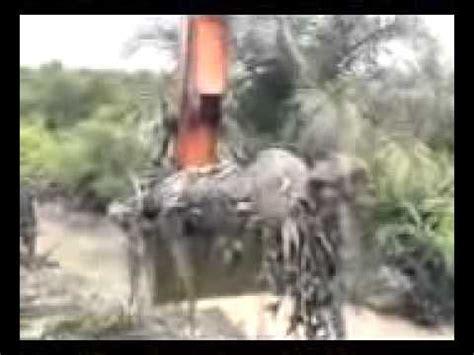 youtube film india ular ular terbesar di dunia indonesia riau xilfy com