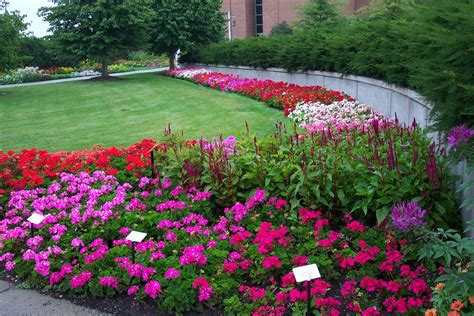 bedding plants bedding plants floriculture at msu