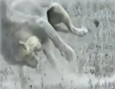 Siapkah Engkau Menghadapi Sakitnya Maut alamcyber 2020 detik azab seekor singa menghadapi sakaratul maut