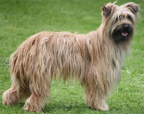 herding breeds herding dogs breeds list