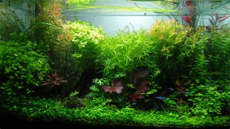 aquascape gallery aquascape gallery aquascaping world competition gallery