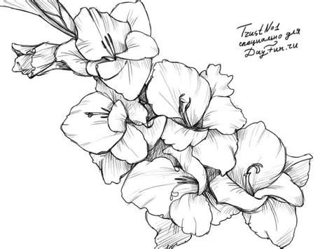 How To Draw Gladiolus how to draw a gladiolus step by step arcmel