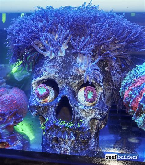 Skull Aquarium Decorations by Poll You Used Skulls Or Other Creative Forms In