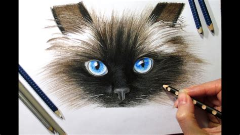 White Colorless Cat Eye pencil drawings pencil drawings of cats