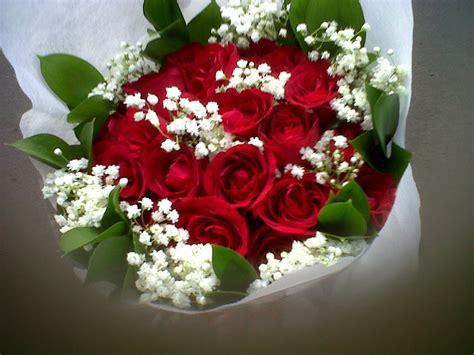 gambar gambar bunga mawar merah kumpulan gambar