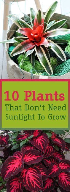 kitchen plants that don t need sunlight 17 best images about house garden on pinterest