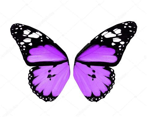 imagenes mariposas violetas alas de mariposa violeta aislado sobre fondo blanco