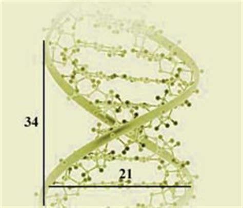 golden ratio dna spiral golden ratio dna green