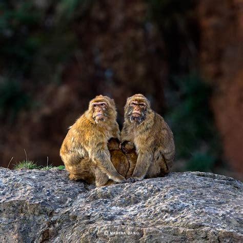 Imagenes Increibles De Animales | hermosas imagenes de animales salvajes en su habitat narutal