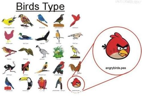 types  birds weneedfun
