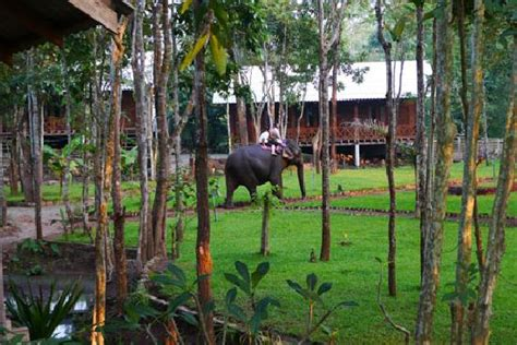 Elephant In The Garden by Tadlo Lodge Ban Laongam Laos Reviews Photos Price Comparison Tripadvisor