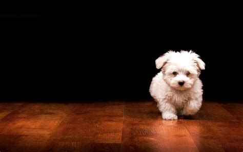 Wallpaper Dog Bdfjade   cute dog wallpaper bdfjade