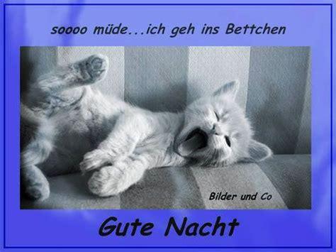Gute Nacht Katzen Bilder by Gute Nacht Gb Pics Gute Nacht Gute Nacht