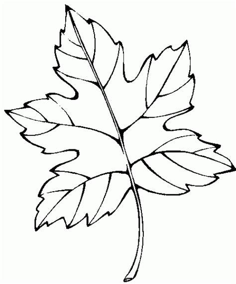 hojas de otono coloring pages dibujos de hojas de flores para colorear