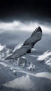 Lu Led Eagle Eye Motor celestial dreams animals beautiful all