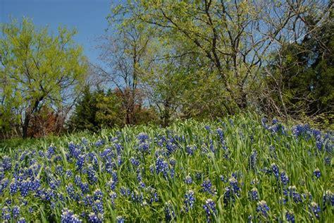 34 best cedar hill images on cedar hill cedar hill and texans