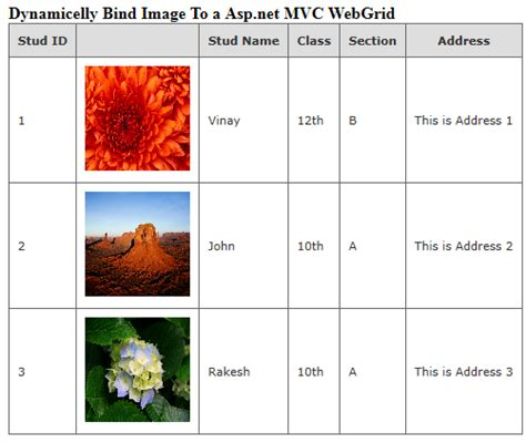 how to remove layout from view in mvc code to dynamically bind image to asp net mvc webgrid