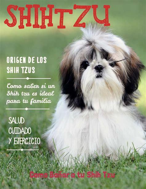 shih tzu features calam 233 o shih tzu revista