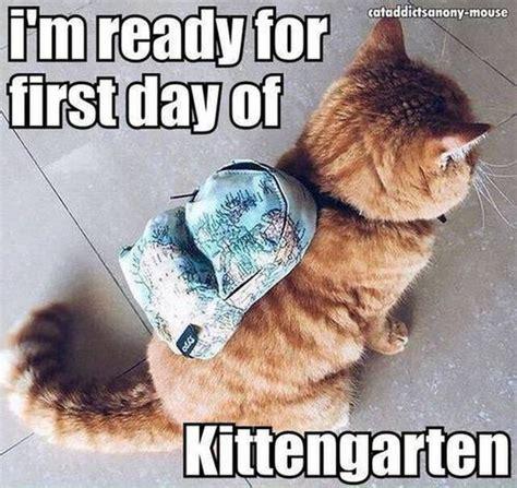 top 25 funny cat memes cutest cats