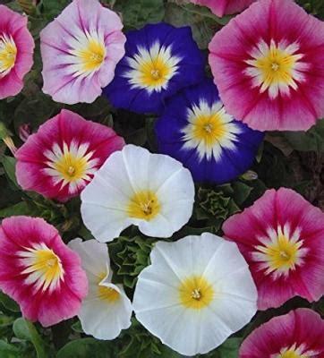 di giorno fiori di giorno