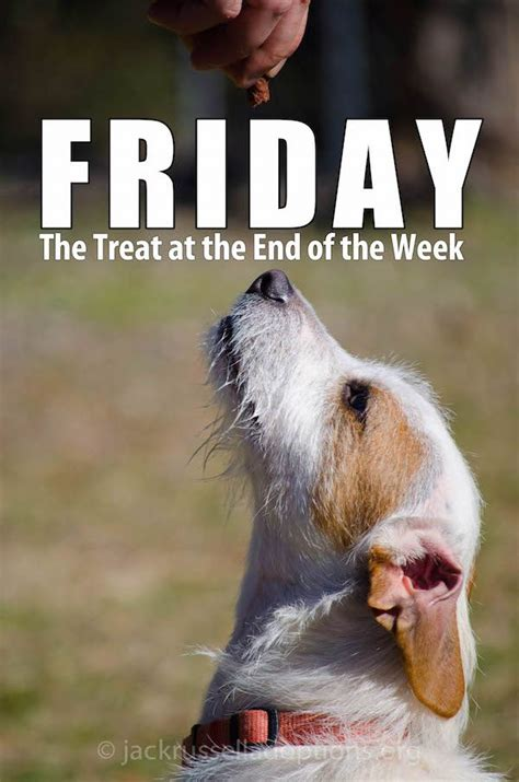 Friday Treat by Jrtadoptions Happy Friday Enjoy Your Treat At The End Of