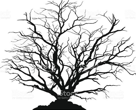 Y Tree Drawing by Silhouette Of A Shaped Deciduous Tree With No Leaves