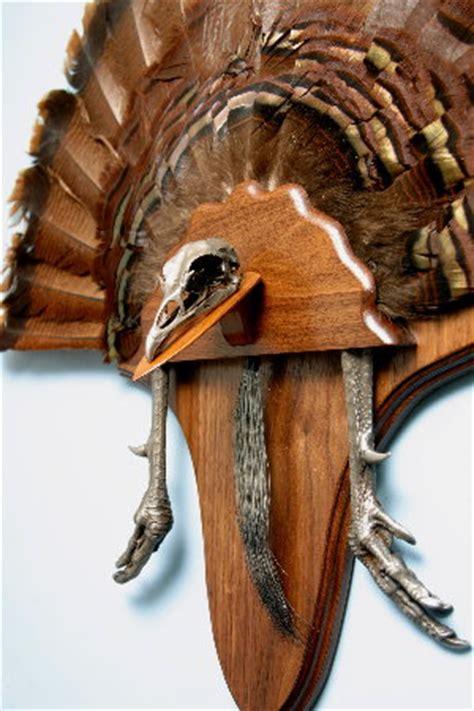 Turkey Fan Mount Template by Ways To Mount A Turkey Images