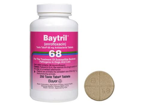 baytril dosage for dogs bayer baytril