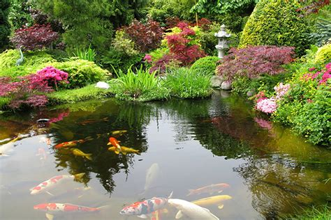 Backyard Coy Ponds by Inspiration The Japanese Garden Nik Nak
