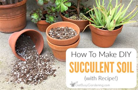 Soil Mix For Outdoor In Ground Succulents - how to make your own succulent soil with recipe